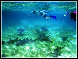 Shark Ray Allley snorkelers